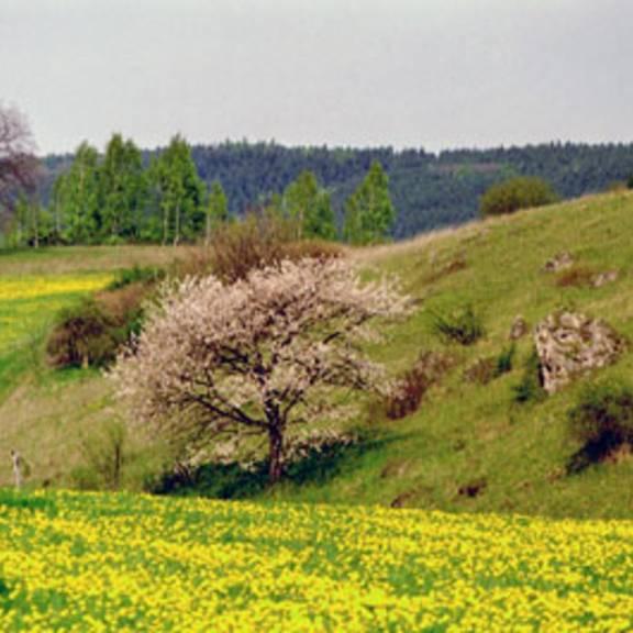 am Dromberg