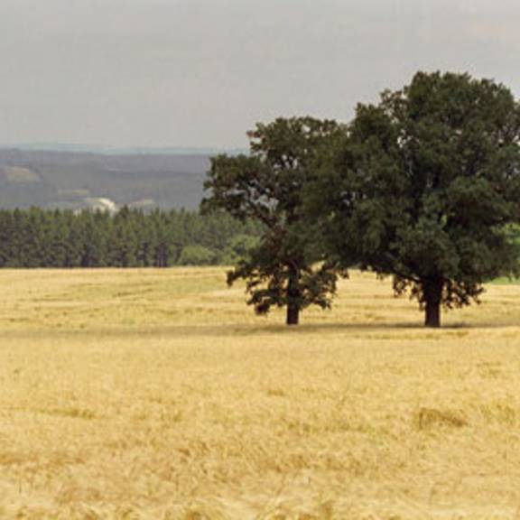Orlataler Feldgebiet